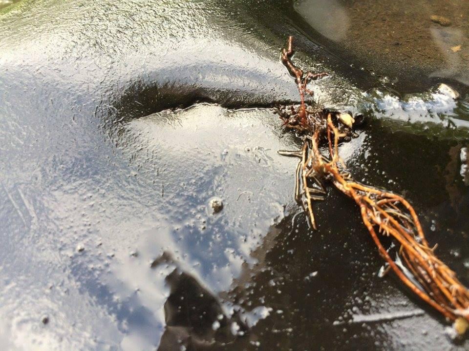 News Aus Dem Sandersdorfer Wassergarten